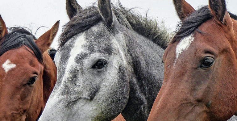 Case Study: IoT Solution for Equine Welfare and Performance 30