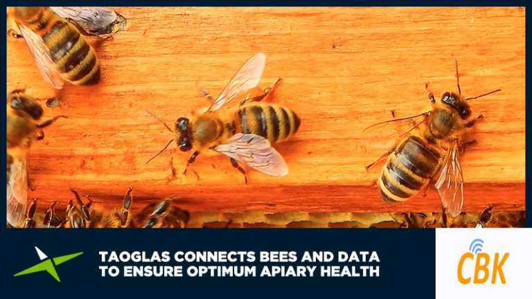 Case Study: Taoglas connects bees and data to ensure optimum apiary health 34
